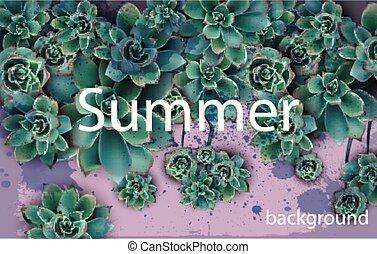 beau, succulent, conceptions, fond, vert, étoiles, floral, carte, vector.
