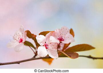 beau, tôt, flowers., délicat, printemps
