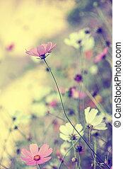 beau, tendre, fleurs, fond, barbouillage