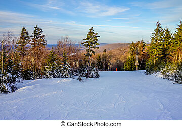 beau, timberline, hiver, virginie occidentale, paysage