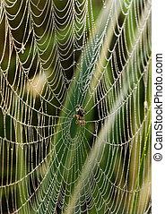 beau, toile, araignés