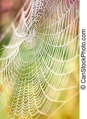 beau, toiles araignée,  détail