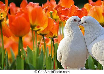 beau, tulipe, fleurs, jardin