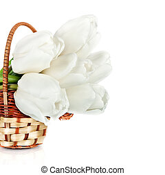 beau, tulipes, blanc, panier, isolé