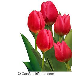 beau, tulipes, eps, carte, 8, template., rouges