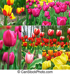 beau, tulipes, fleurs, -, printemps