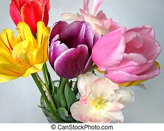 beau, tulipes