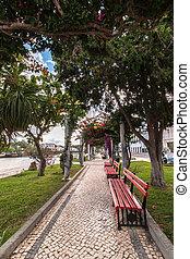 beau, urbain, délassant, parc, flowers., bougainvillea, vue
