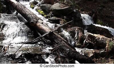 beau, usa, parc national, chute eau, closeup, sequoia, californie