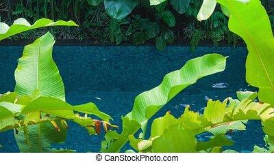 beau, usines, baigner, vert, pool., girl, feuilles, couverture, vacances, flotter, jeune, enjoing, en mouvement, blonds, complet, noir, vue., banane
