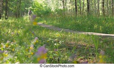 beau, vélo, athlète, ensoleillé, day., par, forêt, promenades
