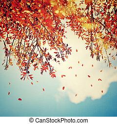beau, vendange, automne, fond