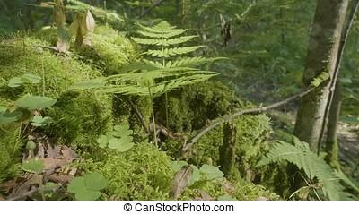 Corce lichens arbre lichens troncs particularly - Mousse sur les arbres ...