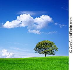 beau, vert, nature
