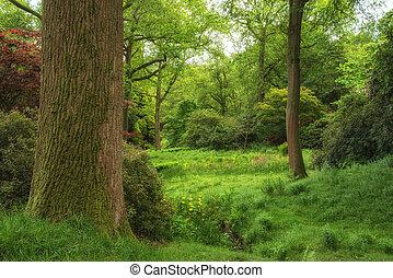 beau, vibrant, image, luxuriant, forêt verte, pays boisé, paysage