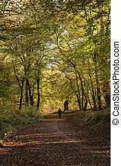 beau, vif, doré, automne, automne, forêt, paysage