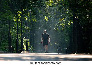 beau, ville, couloir, parc, arbres, park., vert, ruelle, walkway, sentier