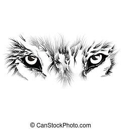 beau visage, loup