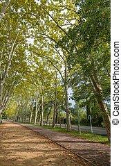 beau, vue, jour ensoleillé, walkway