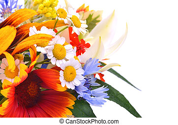 beau, wildflowers, chamomiles, chrysanthèmes, cornflower