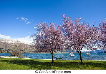 beau, zélande, fleur, scénique, parc, lac, à côté de,...