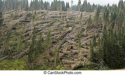 beaucoup, arbres tombés, montagne