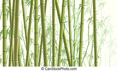 beaucoup, bamboos., illustration