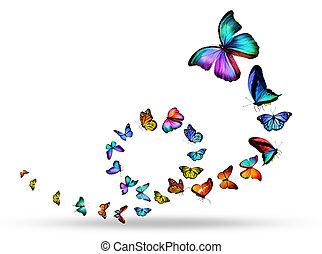 beaucoup, différent, papillons, boucle