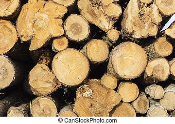 beaucoup, scié, troncs arbre, nature, protection, concept
