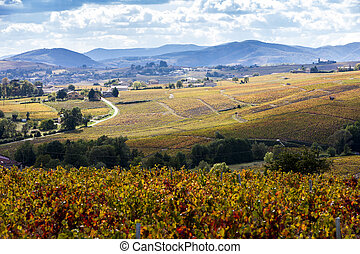 beaujolais, vigne, rhone-alpes, francia