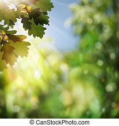 beauté naturelle, chêne, résumé, arrière-plans, bokeh, feuillage