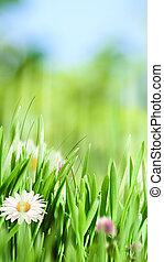 beauté naturelle, conception, camomille, fleurs, bannière, ton