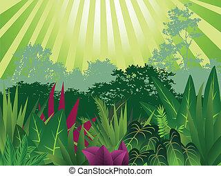 beauté tropicale, forêt, fond