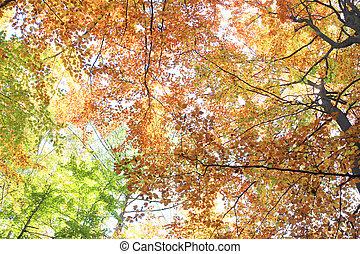 beautful, φθινόπωρο