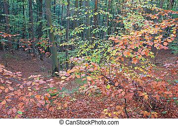 Beautful Autumn