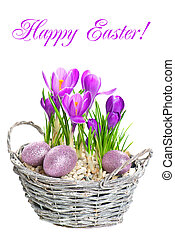 beautifil, 春天花, 番紅花, 由于, 復活節蛋, 裝飾
