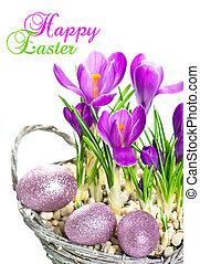 beautifil, 春天, 番紅花, 花, 由于, 復活節蛋, 裝飾