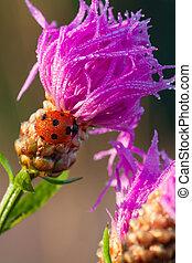 macro the ladybug sits on a flower