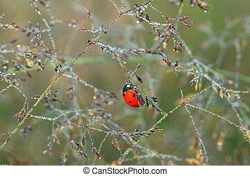macro the ladybug sits on a grass