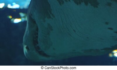 Beautiful a shark in an aquarium. Underwater Scene, 3840x2160