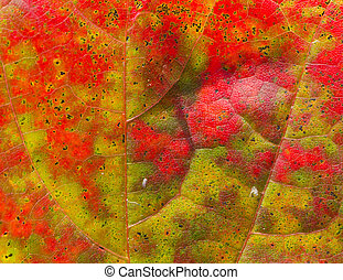 beautiful abstract autumn maple leaf background