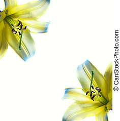 Beautiful abstract lilly frame
