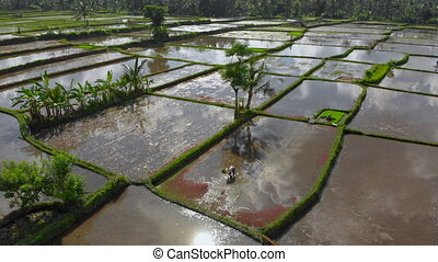 Beautiful aerial shot of a group of farmers that are planting rice on a big field filled by water. Clouds reflecting in the water. Travel to Bali concept