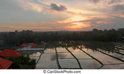 Beautiful aerial shot of rice filed covered with water and surrounded by palm trees during sunset. Travel to Bali concept