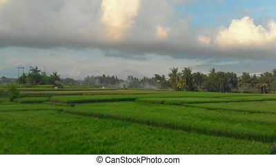 Beautiful aerial shot of the rice fields surrounding the Ubud village with the Agung mountai in a far away. Aerial view on the Agung volcano
