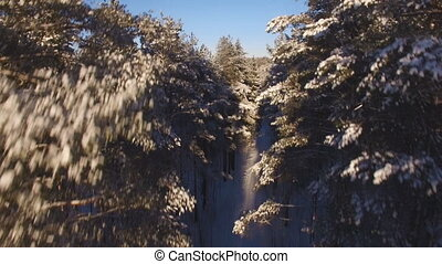 Beautiful aerial view of snow-covered forest