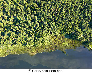 Beautiful aerial view of the drone on the river and the green forest on a sunny day. Natural background