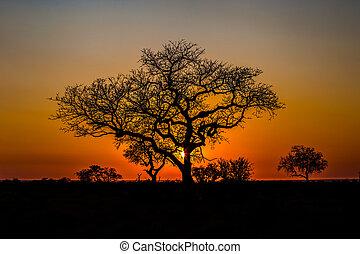 Isimangaliso Wetland Park - Beautiful African landscape at...