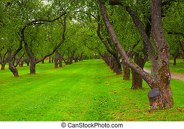 beautiful alley in the park with green lawn