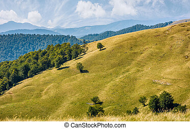 beautiful alpine grassy meadow in Carpathians. autumnal...